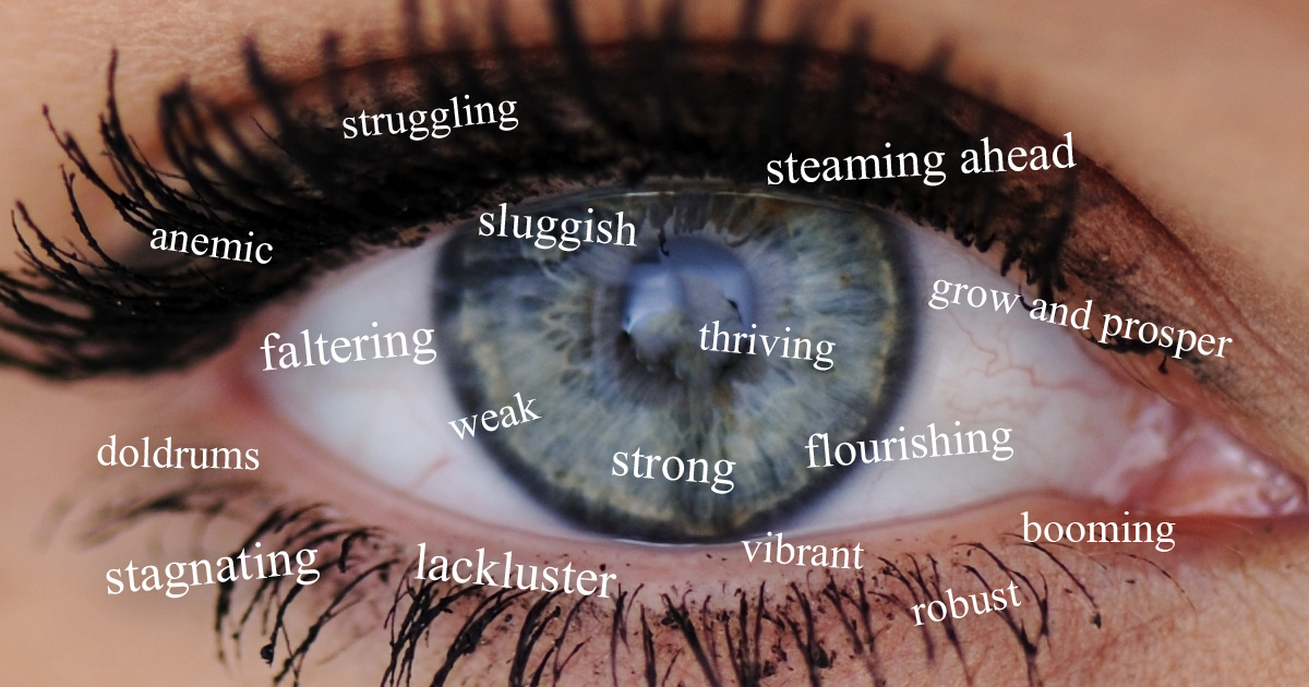 eye and economy descriptors